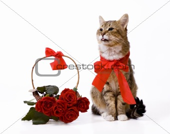 Cat and red rose basket