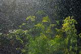 dill and  rain