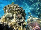Underwater scene in Red sea