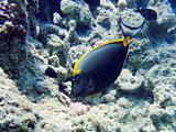 Underwater scene in Red sea 2