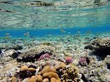 Underwater scene in Red sea 3