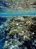 Coral garden in Red sea 2