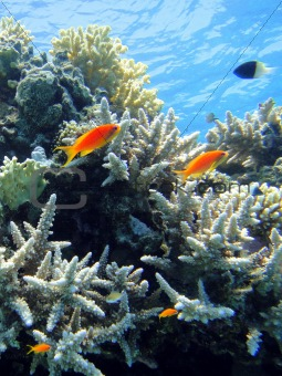 Underwater scene in Red sea 5