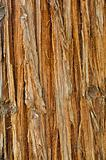 Sequoia bark