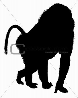 Baboon silhouette