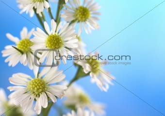Small White Flower