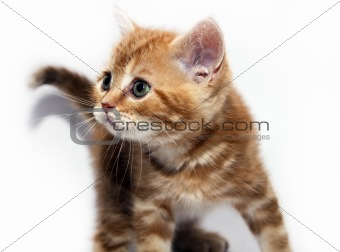 kitty