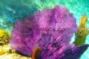 Caribbean coral reef Mayan riviera colorful