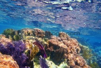 Caribbena coral reef Mayan riviera colorful