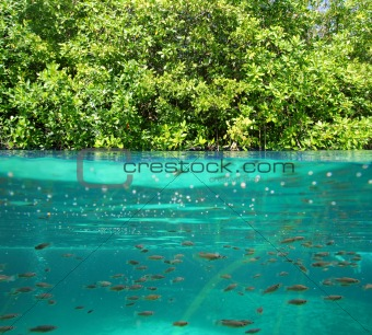 mangrove up down waterline real ecosystem