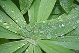 Nature raindrops on leaves