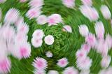 Flower vortex