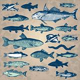 vintage fish set (vector)