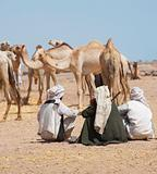 Bedouin traders at a camel market