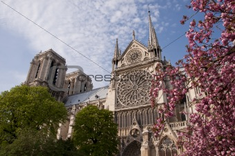 Beautiful view of the Notre Dame with blossoms