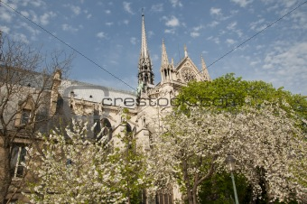 Blossoming trees next to the Notre Dame cathedral