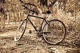 Bike near tree. Photo in old yellow style.