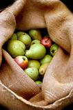 Apples in sack