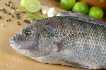 Fish Called Tilapia
