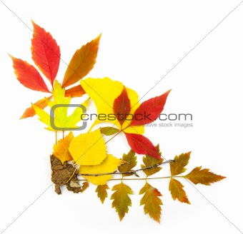 Autumn frame corner / beautiful real leaves / isolated on white