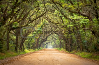 Botany Bay Spooky Dirt Road Creepy Marsh Oak Trees Tunnel
