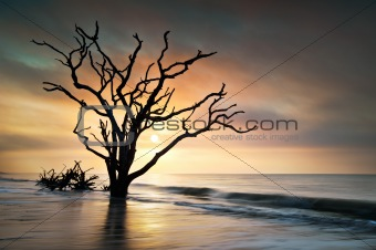 Bone Yard Sunrise at Botany Bay Beach on Edisto Island