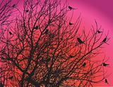 birds on tree branches on dawn sky