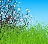 vector tree with flower at spring green field and blue sky