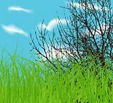 vector tree at spring green field and blue cloud sky