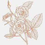 hand drawing illustration of a  bouquet of roses