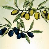 Green and black olives on the branches