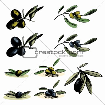 Collection of the different olive illustrations