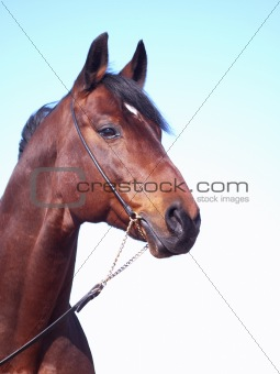 portrait of beautiful horse