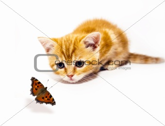 kitty and butterfly