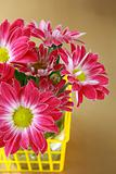 pink chrysanthemum flowers in the yellow basket