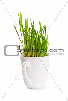 green grass in coffee cup