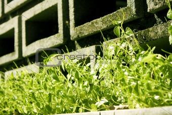 Green grass on brick wall