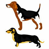 Dogs on white background
