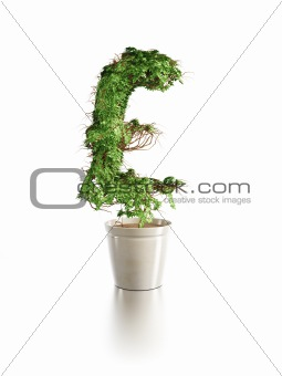 growing pound tree