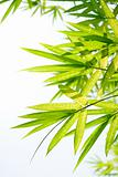 Beautiful Bamboo Border
