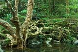 tree in water in forest
