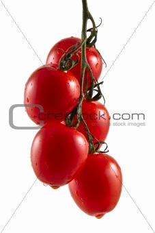Five hanging truss tomatoes