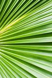 Palm tree leaf abstract background