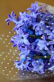 Fresh spring flowers purple hyacinths on a gold background