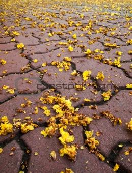 Tiny yellow flowers falling