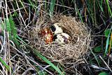 Egg in a nest in a grass in the forest
