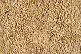 texture, background of millet