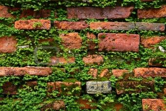 fern on old brick wall