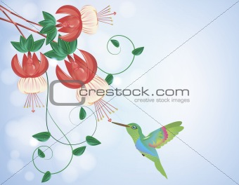 Hummingbird getting nectar from a flower