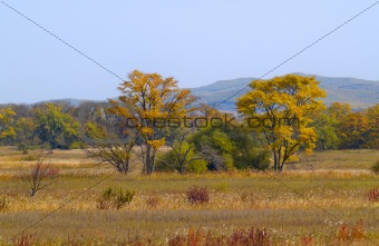 Autumn landscape on the brink of wood